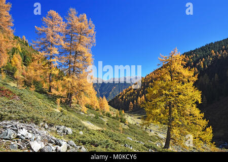 Colorful fall forest at a sunny day in the Tyrolean Alps, Austria - Stock Photo