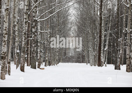 Winter snowy day in a beautiful forest - Stock Photo