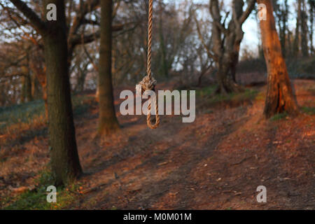 Noose hanging in a forest, England, Britain - Stock Photo