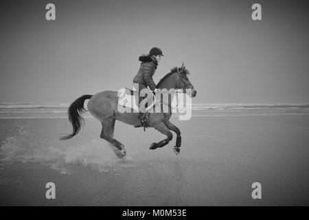 A female horse rider riding from left to right over low tide on a beach captured with some water rising off the - Stock Photo