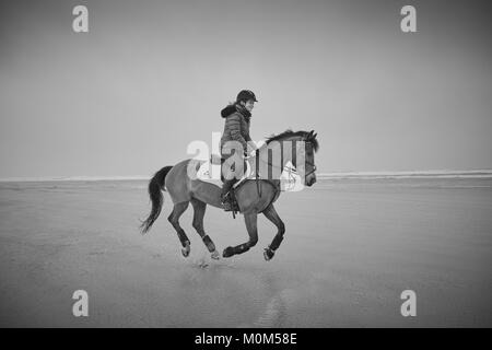 A female horse rider riding from left to right over low tide on a beach, captured with all four legs off the ground. - Stock Photo