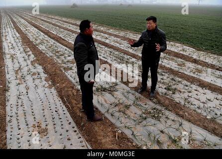 (180123) -- ZHENGZHOU, Jan. 23, 2018 (Xinhua) -- First secretary Han Yunan (R) of Qianhe Village checks the growth - Stock Photo