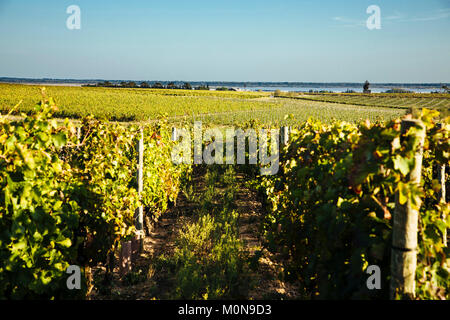 Vauvert (south-eastern France) on 2014/04/10: vineyard of Costieres de Nimes, with the Scamandre Pond and the 'Petite - Stock Photo