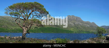 Scots pine tree (Pinus sylvestris L.) on the shores of Loch Maree and the mountain Slioch, Wester Ross, Scottish - Stock Photo