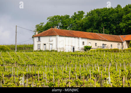 Typical farmhouse and vineyard growing vines near Touzac in the Grande Champagne Hills region, an attractive cognac - Stock Photo