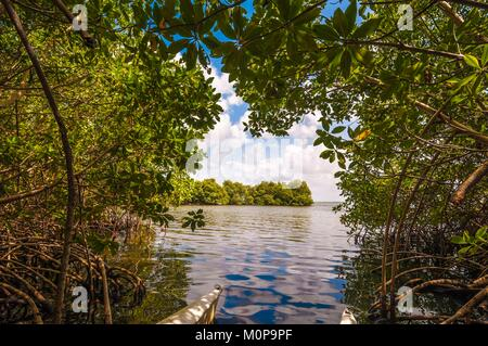 France,Caribbean,Lesser Antilles,Guadeloupe,Grande-Terre,Morne-à-l'Eau,Guadeloupe National Park,Grand Cul-de-Sac - Stock Photo