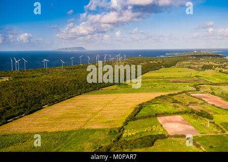France,Guadeloupe,Grande-Terre,Saint-François,aerial view of sugar cane fields in the perspective of Pointe des - Stock Photo