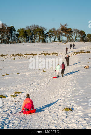 Family with parents, children and dogs, walking uphill on snow covered path, with sledges in sunshine, Strathclyde, - Stock Photo