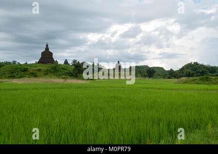 A very green rice field in front of ancient pagodas on small hills at a cloudy day in Mrauk U, Rakhine State, Myanmar - Stock Photo