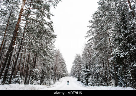 A woman stands in an enormous snow covered forrest. Labanoro Regional Park, Lithuania. - Stock Photo
