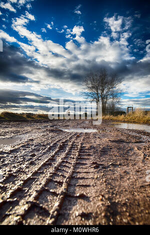 Vertical photo with autumn landscape. Brown wet road with several puddles captured from low view where the path - Stock Photo