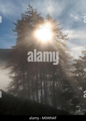 Early morning misty sunrise with radiating sunbeams shining through silhouette of conifer trees, English Lake District, - Stock Photo