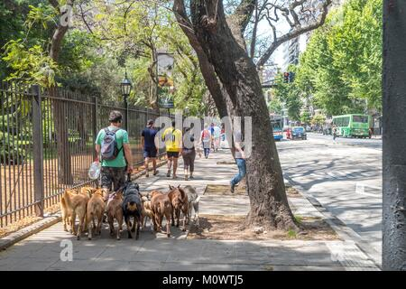 Argentina,Buenos Aires province,Buenos Aires,dog walker - Stock Photo