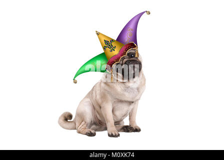 cute Mardi gras carnival pug puppy dog sitting down with harlequin jester hat, isolated on white background - Stock Photo
