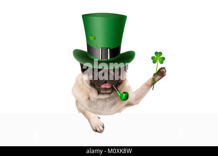 st patricks day pug puppy dog with green leprechaun hat and pipe, holding up shamrock clover, isolated on white - Stock Photo