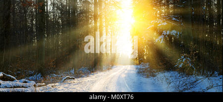Sun in winter forest - Stock Photo