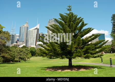 Royal Botanic Garden Sydney on a sunny day with high rise CBD in background. Blue sky. Specimen tree. - Stock Photo
