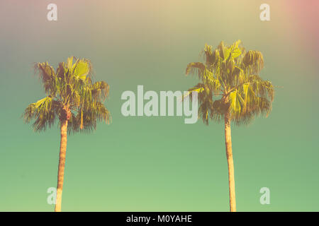 Two Palm Trees on Toned Light Turquoise Sky Background. 60s Vintage Style Copy Space for Text. Tropical Foliage. - Stock Photo