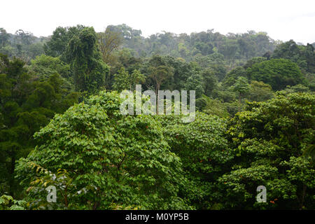 A view of trees and treetops in a tropical rainforest in Corcovado National Park on the Pacific Coast in southern - Stock Photo