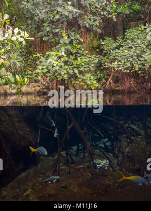 Big tank with tropical fishes and trees in Aquarium in Zoological park,Berlin - Stock Photo