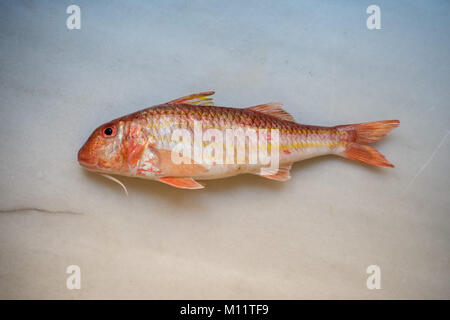 Striped red mullet fish - Stock Photo