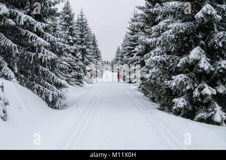 Winter forest with loipe for cross-country skiing - Stock Photo