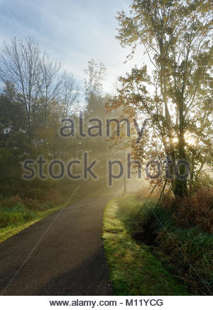 Walking trail with morning sun breaking through the fog - Stock Photo