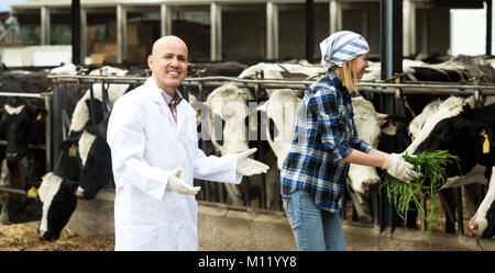 Cheerful two workers of vets working with milky cows in cowhouse outdoors