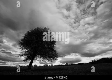 high contrasted black and white cloudscape with tree silhouette in foreground - Stock Photo