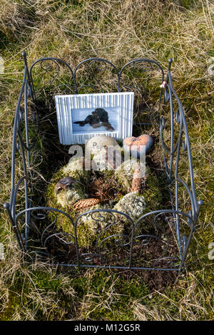 The East Frisian North Sea island Norderney, Germany, animal cemetery in the dunes, - Stock Photo