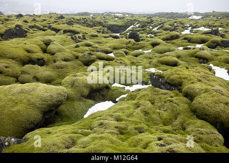 Green field covered by moss on the foggy horizon background in Iceland. There are remains of snow on it. Horizontal. - Stock Photo