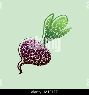 Vector beet. Red beetroot with leaves whole and cut isolated on white background, collection of vector illustrations - Stock Photo