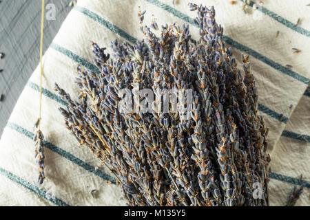 Organic Purple Dry Lavender in a Bundle - Stock Photo