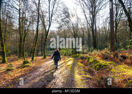 Woman walking along a muddy track with books on through trees in the New Forest near Bramshaw,  Hampshire in winter. - Stock Photo