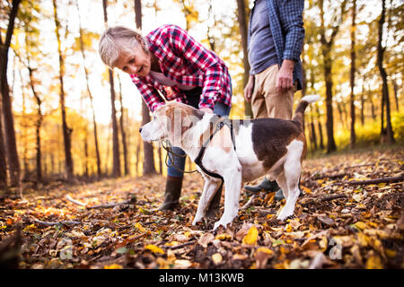 Senior couple with dog on a walk in an autumn forest. - Stock Photo