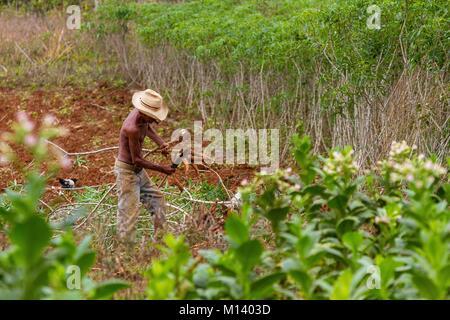 Cuba, Pinar del Rio province, Vinales, Vinales National Park, Vinales Valley UNESCO World Heritage, man working - Stock Photo