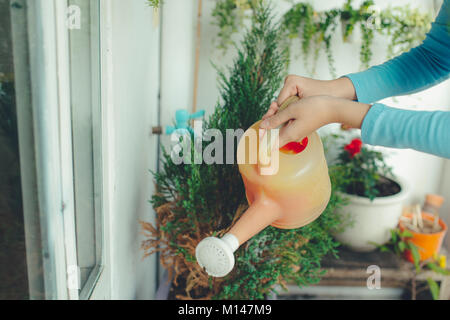 Woman watering plant in container on balcony garden - Stock Photo