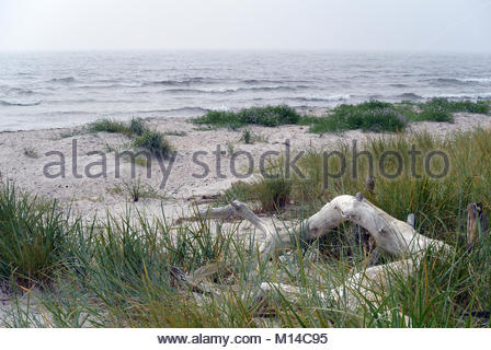 white sand dunes on Bornholm, Denmark - Stock Photo
