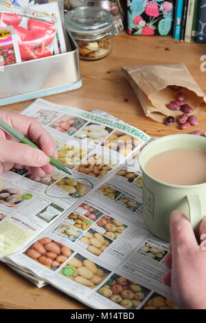 Ordering seed potatoes from a catalogue for the new planting season, in an English garden room in winter (January), - Stock Photo