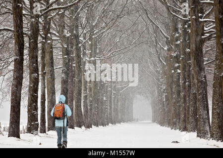 The Netherlands, 's-Graveland, Woman walking in snow in beech forest. Winter. - Stock Photo