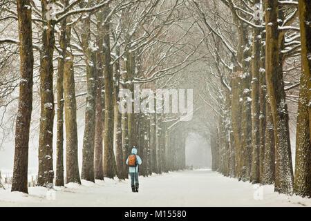 The Netherlands, 's-Graveland, Rural estate called Schaep en Burgh. Woman walking in snow on forest beech lane. - Stock Photo