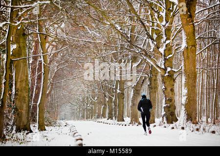 The Netherlands, 's-Graveland, Rural estate called Spanderswoud. Beech lane in snow. Man running. Winter. - Stock Photo