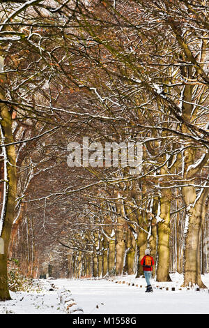The Netherlands, 's-Graveland, Rural estate called Spanderswoud. Woman walking in snow on forest beech lane. Winter. - Stock Photo