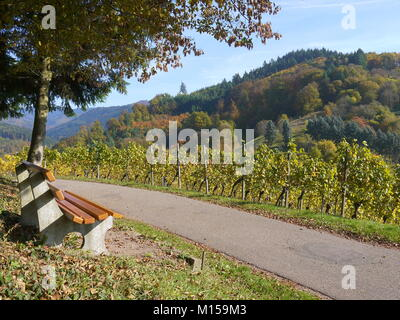 Empty bench overlooking vineyards and mountains covered in autumn colour in Gengenbach Black Forest area of Germany - Stock Photo