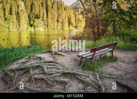 Cozy bench in the forest near the lake with roots of trees under your feet. A picturesque place to relax. Artistic - Stock Photo
