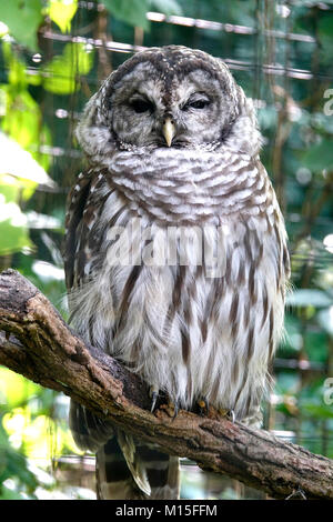 Wise Owl Sitting on Tree Branch - Stock Photo