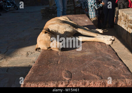 Let sleeping dogs lie, Kumbhalgarh, Rajasthan, India - Stock Photo
