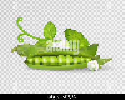 Vector photo-realistic pods of green peas with leaves on transparent background. 3d green peas illustration. - Stock Photo
