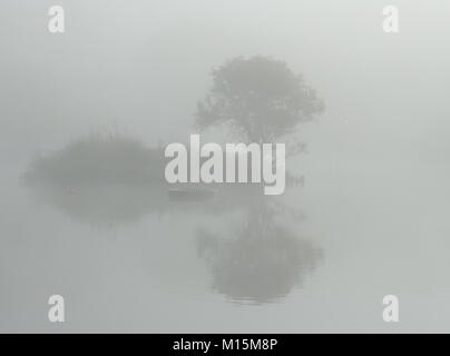 Taken while out early in the morning walking around Trenance gardens, Newquay, Cornwall. The mist had drifted in - Stock Photo