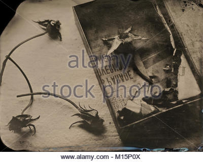Tintype of a silver box of roses and antique newspaper. Wording is backwards because of the wetplate process. - Stock Photo